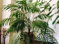 Various decorative indoor plants/trees for sale