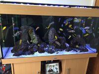 Juwel Rio 300 aquarium in beach full set up