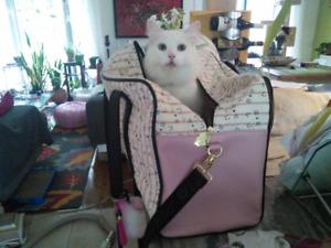 Gardienne chat-visites a vote domicile a partir de 12$/visite