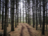 Trail Building, Design, and Maintenance for your property
