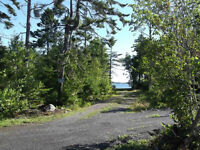 LONELY ROBINS ' WAITING FOR NEW LAND OWNERS~ RURAL PICTOU