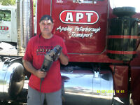 Mobile Truck polishing