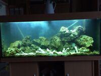 Juwel 240L marine fish tank
