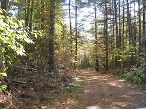 100 Acres Forested Land For Sale
