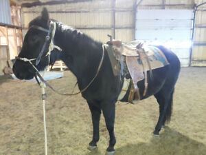 9 year old mare