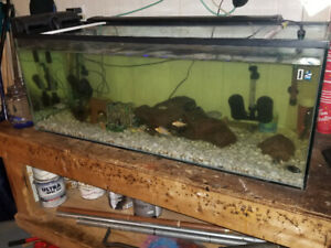 75 gallon fish aquarium comes w/everything even fish $325