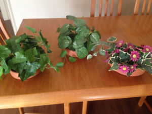Silk plants - small table size