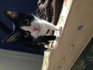 Free almost 1 year old cat for rehoming