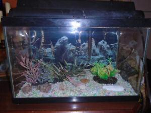 5 gallon aquarium - Aquarium 5 gallons