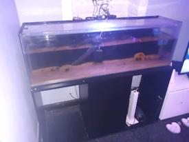 Fish tanks / aquarium