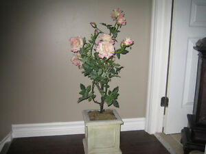 POTTED ROSES London Ontario image 1
