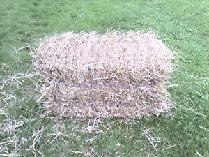 Straw Bales for Sale Kitchener / Waterloo Kitchener Area image 2
