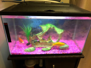 Fish tank with all supplies and fish (10 gallons)