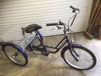 KENTEX Adult Tricycle