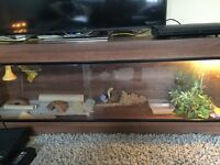 Swap 6ft vivarium £130