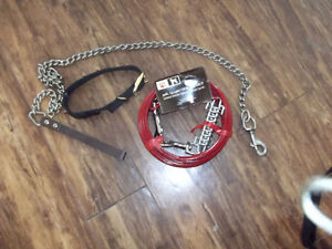 Dog tie out,collar & lead - All for $20  OBO