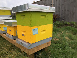 Production Ready Hives for Sale