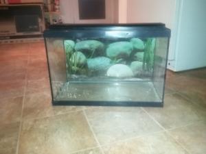 Aquarium , terrarium 20 gallons