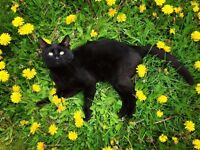 Lost black cat - TOULOUSE
