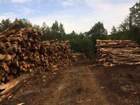 Firewood logs/culls for sale