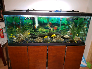 150 gallon fish tank with accessories