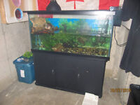 Turtle, Tank and Accessories