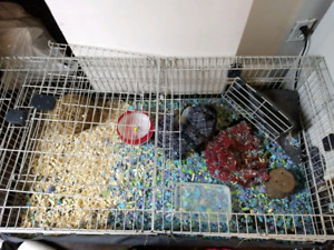hedgehog for rehoming