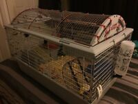 3-6 month old female pet rats first one with $175.00 takes them