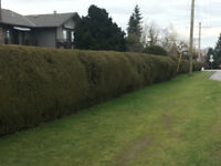 Tree Pruning/Hedge Trimming/Complete Gardening Services