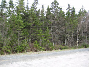 Treed 1.1 Acre Building Lot in Hacketts Cove