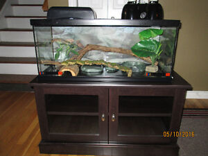 Reptile Habitat With Stand
