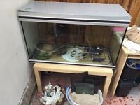 Big fish tank + stand including everything £125 OPEN TO OFFERS
