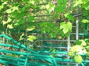 fence panel suitable for latice for climbing plant.