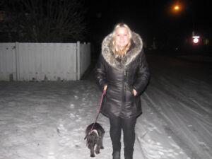 Offre promenades bénévoles pour chiens