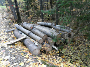 Firewood Logs for free