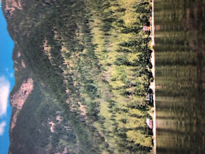 RV Lot for Rent in Sicamous