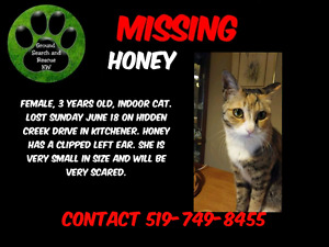 Honey is missing