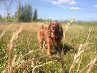 Garderie Pension Chiens Chats - Frantz Prevaly Centre Canin