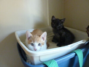Kittens ready to go