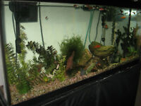 55 gallon aquarium with ton's of extras and fish