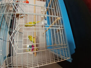 2 Budgies with bird cage.