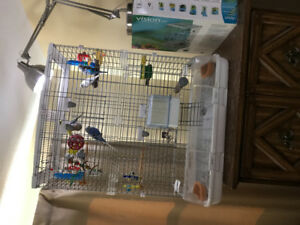7 Healthy Budgies And Big Cage For Sale