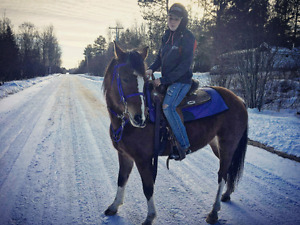 Beautiful paint mare for sale
