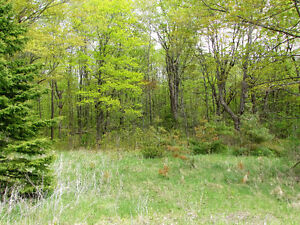 COUNTRY BUILDING LOT - HWY 35, Coboconk. $54,900. Kawartha Lakes Peterborough Area image 4
