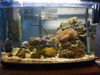 Marine Fish Tank Set