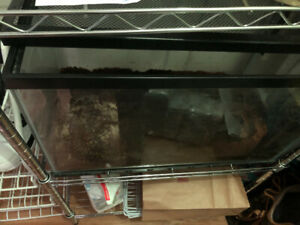Tiger salamander and enclosure