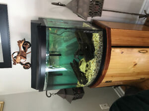 30 gallon aquarium with stand and fish