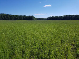 70 Acres of Land in Strathcona County for Cultivation