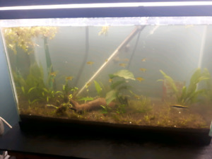 Fish for sale and plants for sale