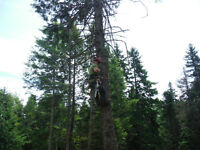 Basic Tree Removal, Fully Insured
